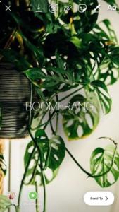 Milkshake Hack | Turn Live Photos into Boomerangs