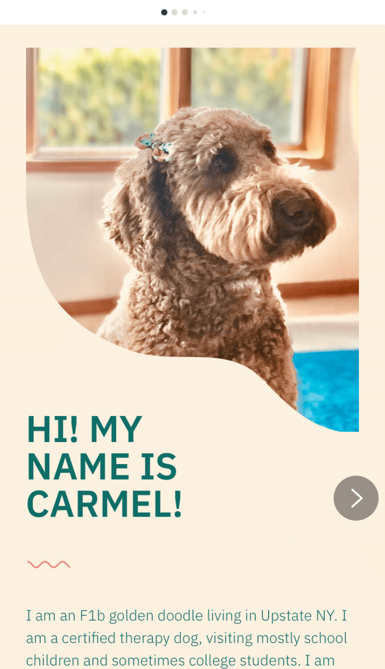 Made with Milkshake | @carmelgoldendoodle